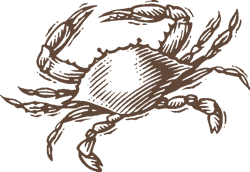 Illustration of a crab